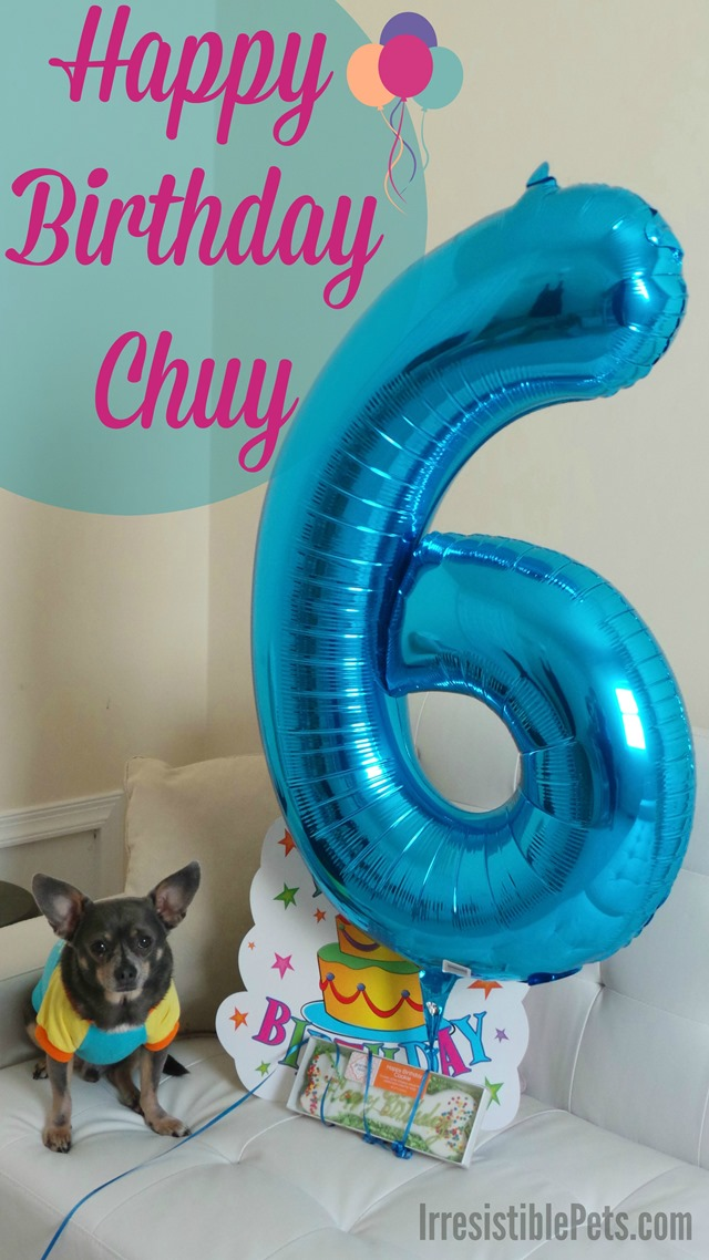 Happy 6th Birthday Chuy - Celebrate with us at IrresistiblePets.com