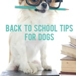 Five Back To School Tips for Dogs