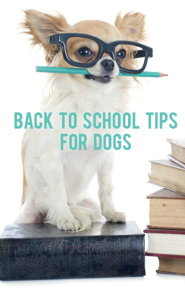 Back To School Tips for Dogs at IrresistiblePets.com