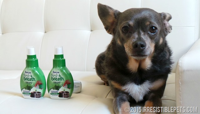 TropiClean Fresh Breath Chuy Chihuahua