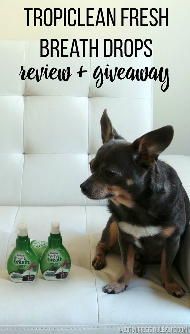 TropiClean Fresh Breath Drops Review and Giveaway #TropiCleanFresh