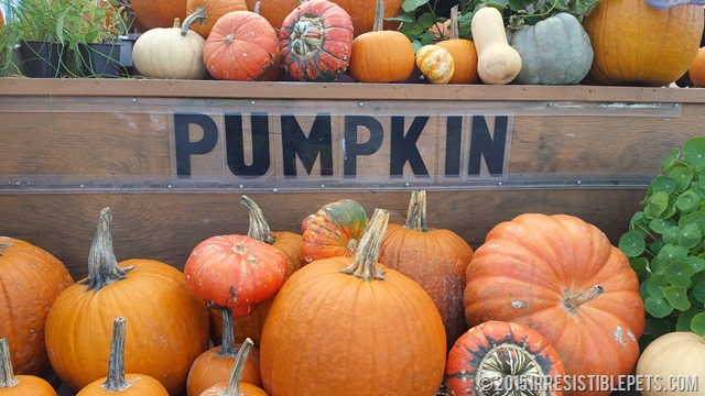 Virginia Beach Farmers Market Pumpkin Sign