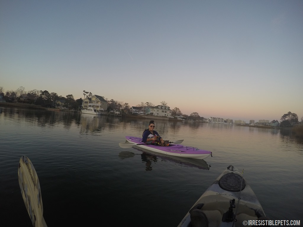 how to go kayaking with your dog