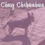 Chuy Chihuahua at the Chesapeake Arboretum & Great Dismal Swamp Trail