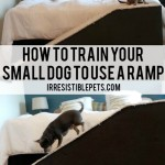 How To Train Your Small Dog to Use a Ramp