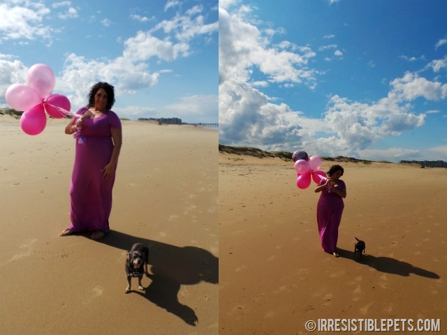 Aimee and Chuy Chihuahua Gender Reveal
