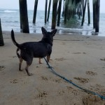 Foggy Day at the Virginia Beach Fishing Pier