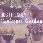 Dog Friendly Container Garden