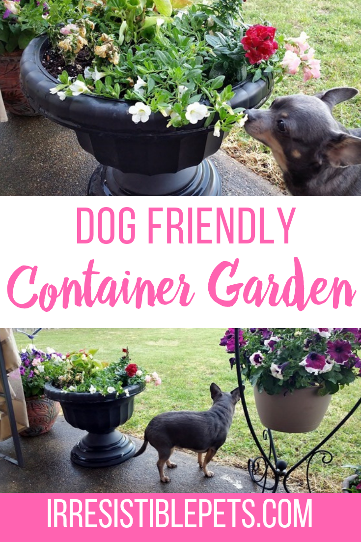 How To Make a Dog Friendly Container Garden