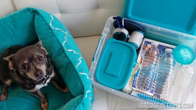Hurricane Prep Kit Chuy Chihuahua
