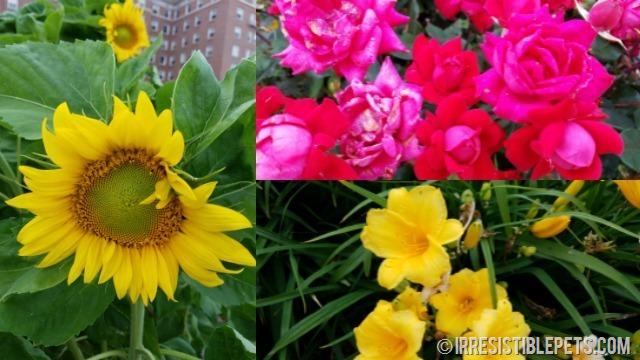 Fort Monroe Flowers