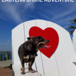 Chuy Chihuahua's Adventure on the Eastern Shore