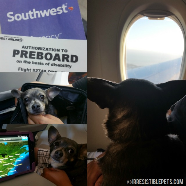 Flying with a Chihuahua on Southwest