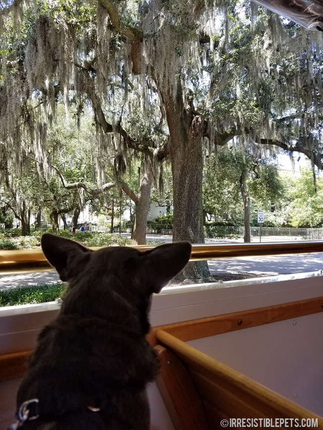 the ultimate guide to dog friendly savannah irresistible petsdog friendly savannah tour