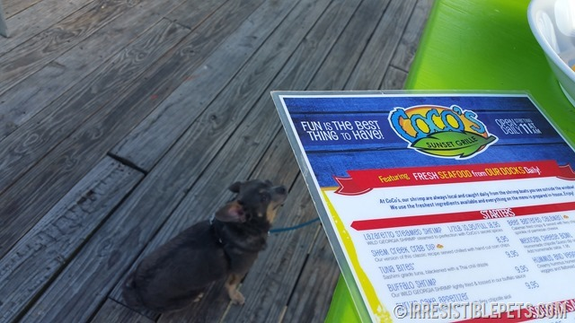 Cocos Sunset Grill Dog Friendly Tybee Island