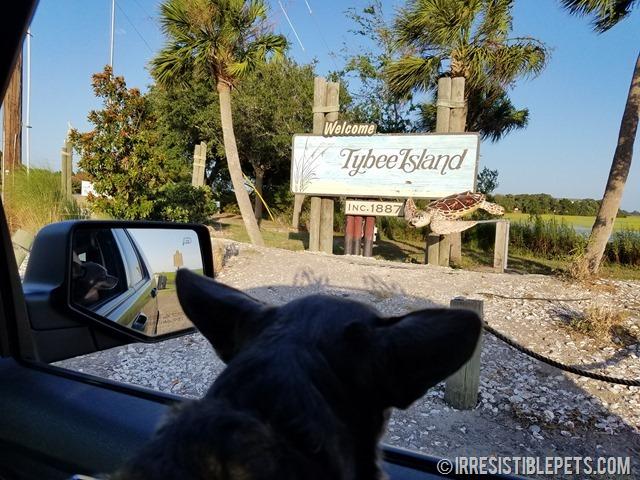 Tybee Island Dog Friendly