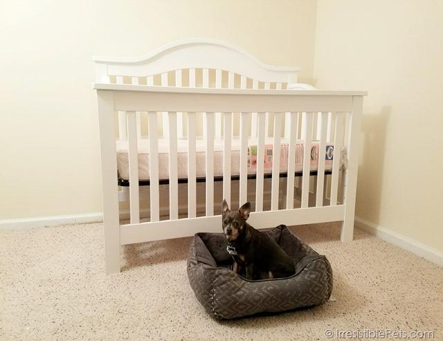 Chuy Chihuahua Crib