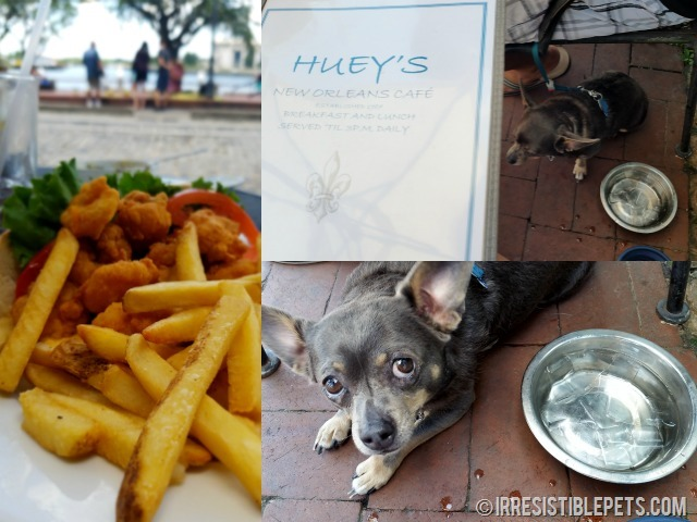 Huey S On The River Dog Friendly Restaurant