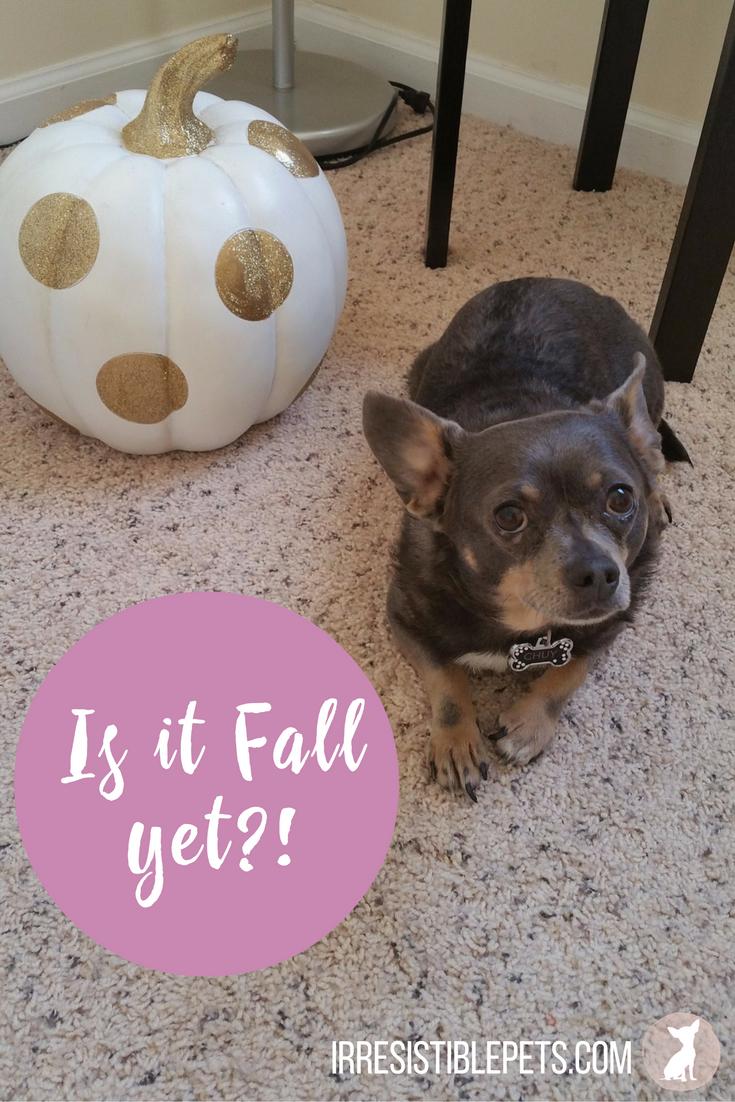 Is It Fall Yet-
