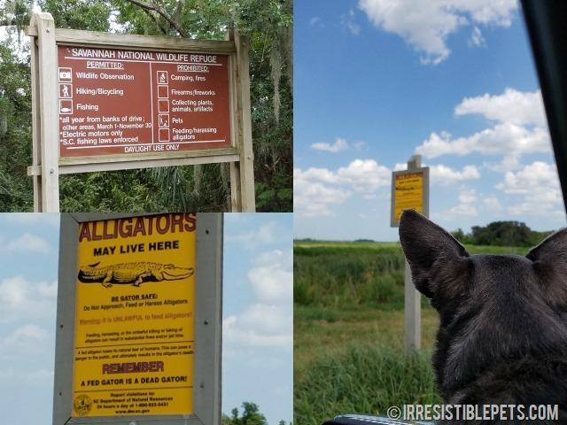 Savannah Wildlife Refuge Car Tour is Dog Friendly