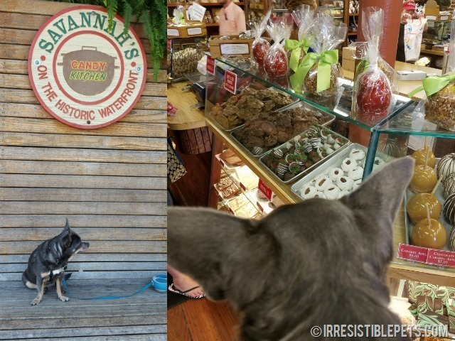 the ultimate guide to dog friendly savannah irresistible petssavannah\u0027s candy kitchen dog friendly