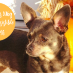 10 Reasons Why Fall is Irresistible for Dogs