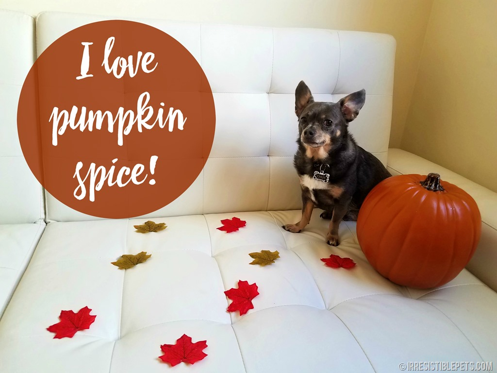 Frozen Pumpkin Spice Dog Treats Irresistible Pets