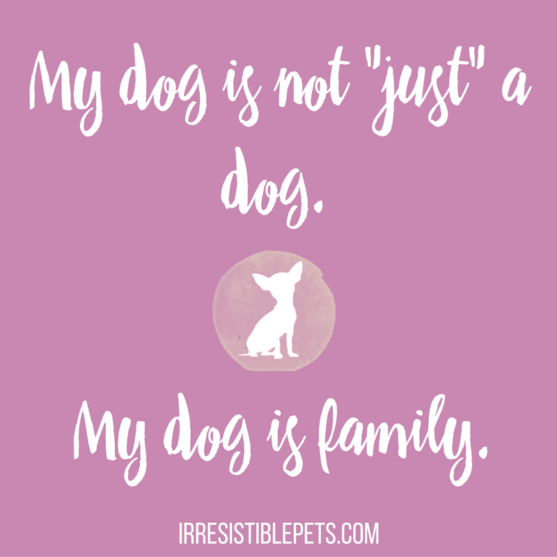 my-dog-is-not-just-a-dog-my-dog-is-family-irresistiblepets-com