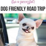 Ten Secret Hacks for a Successful Dog Friendly Road Trip