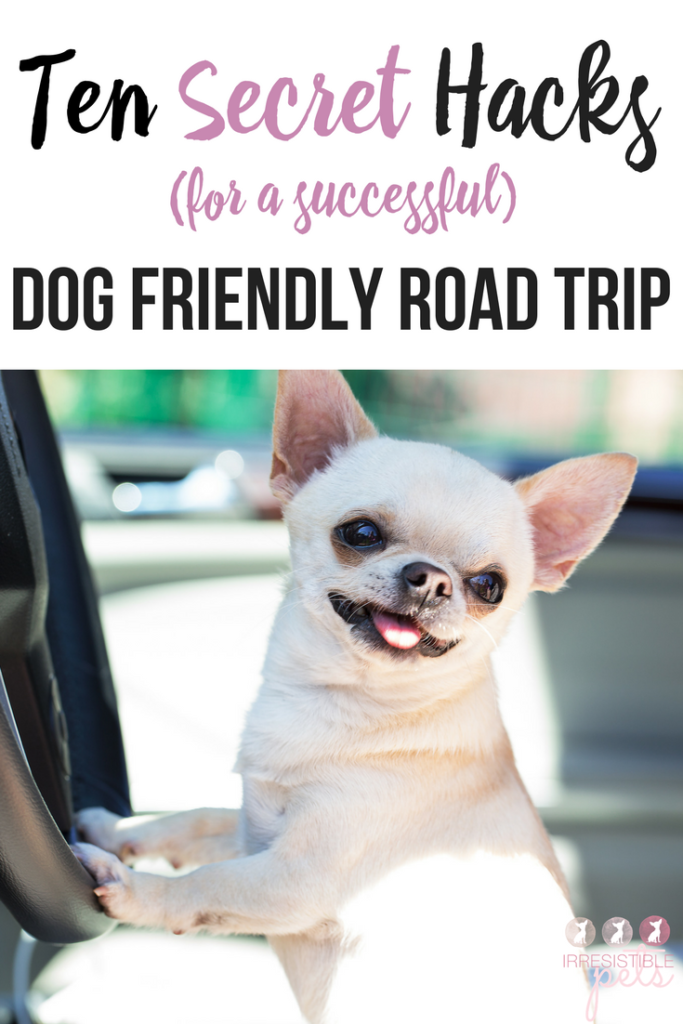 Ten Secret Hacks for a Successful Dog Friendly Road Trip