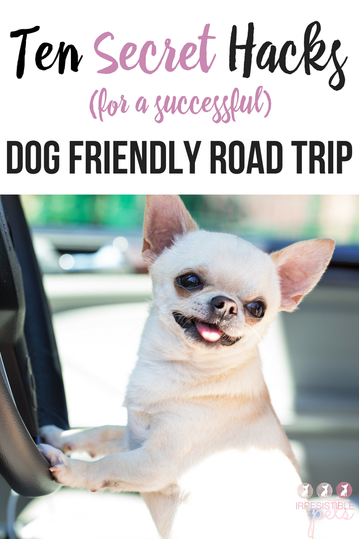 road trip with dog planner