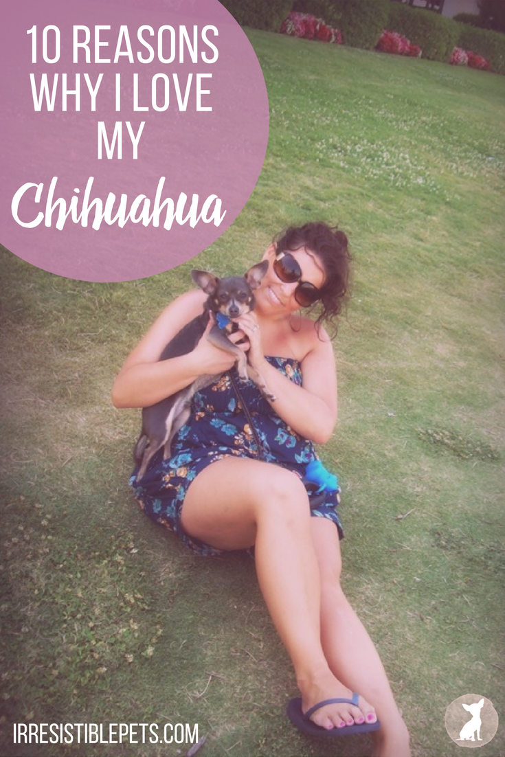 10 Reasons Why I Love My Chihuahua. Read More at IrresistiblePets.com
