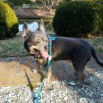 Dog Friendly Walk at the Norfolk Botanical Garden