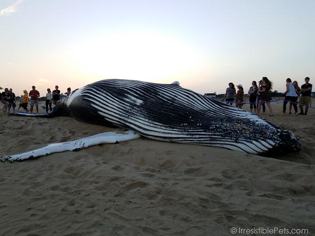 Virginia Beach Whale