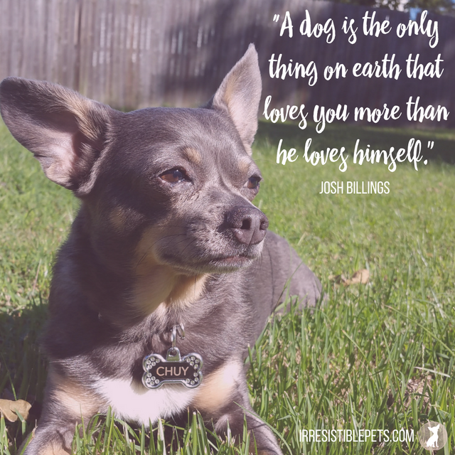 """A dog is the only thing on earth that loves you more than he loves himself."" —Josh Billings"