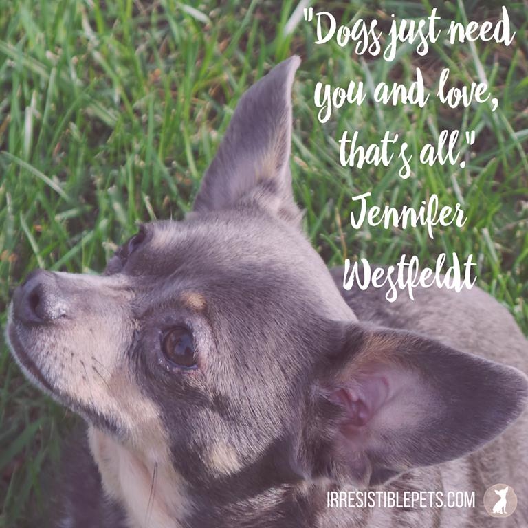 Irresistible Dog Quotes - Irresistible Pets