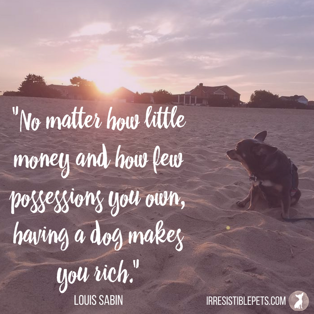No matter how little money and how few possessions you own, having a dog makes you rich. — Louis Sabin
