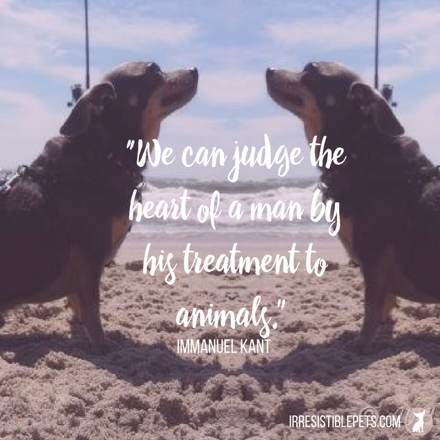 """We can judge the heart of a man by his treatment to animals."" -Immanuel Kant"