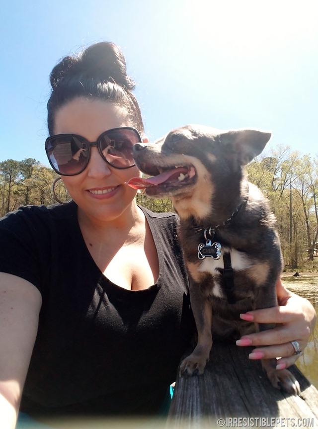 Chuy Chihuahua Newport News (33)
