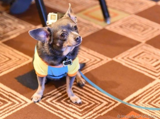 Chuy BlogPaws Party
