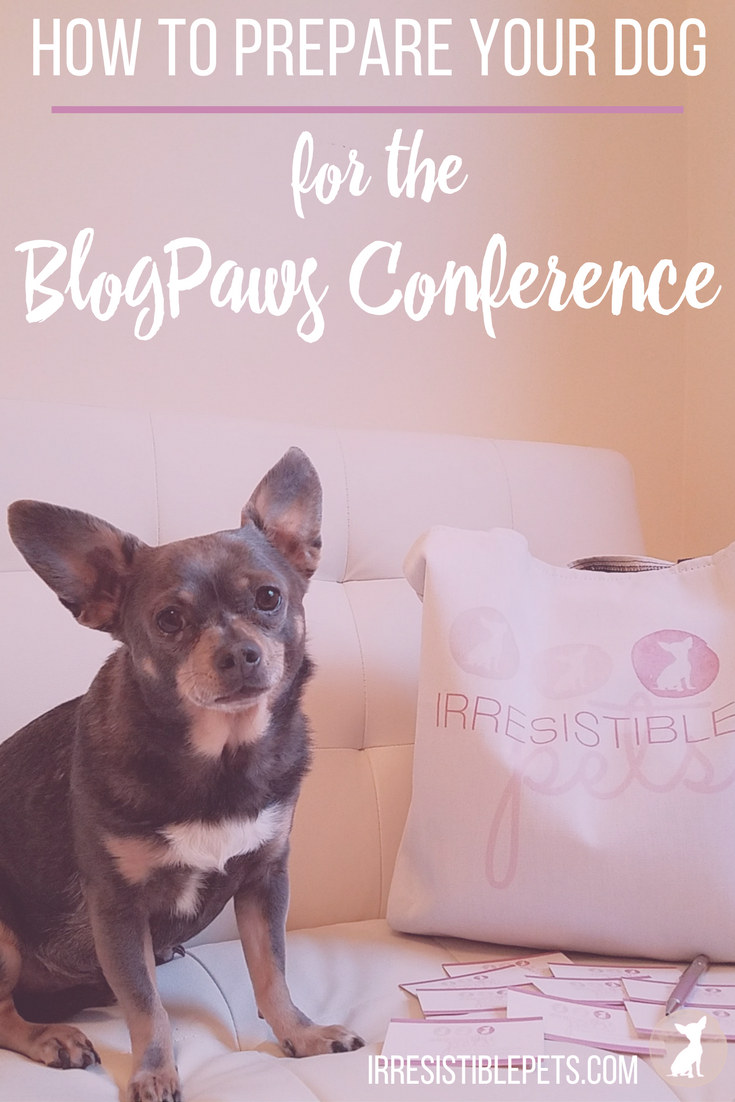 How To Prepare Your Dog for the BlogPaws Conference by IrresistiblePets.com