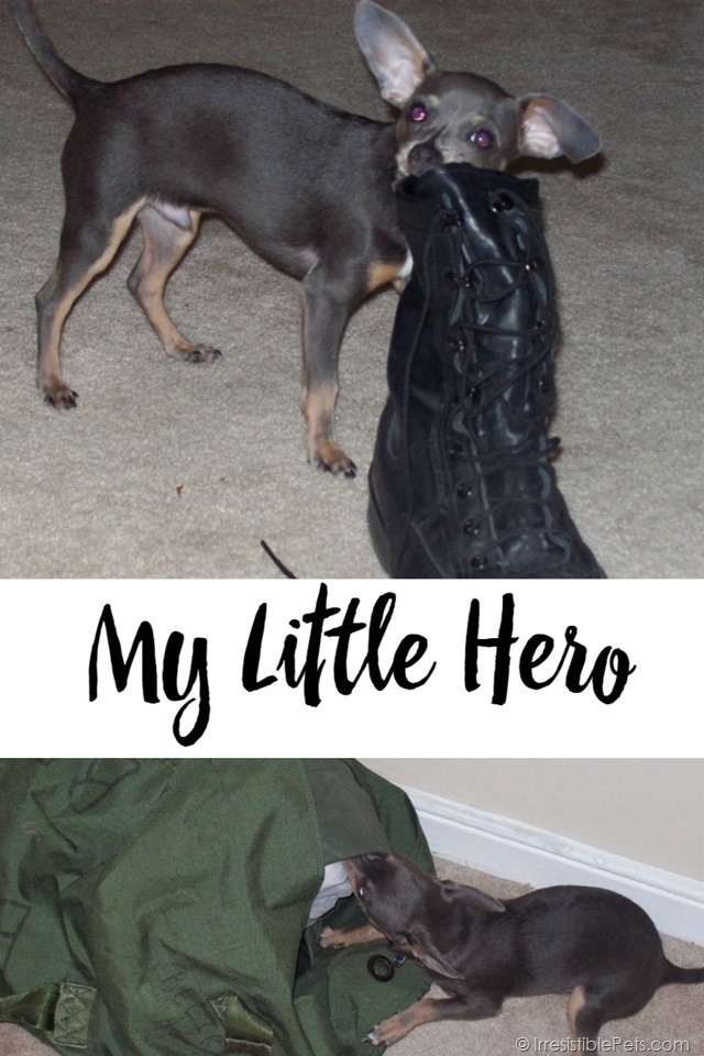 My Little Hero