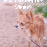 Fun Things To Do With Your Dog This Summer by IrresistiblePets.com