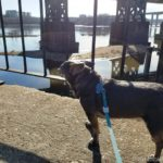 Chuy Chihuahua's Belle Isle Adventure