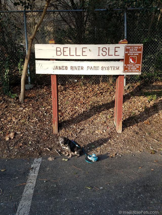 Chuy Chihuahua Belle Isle Adventure (24)