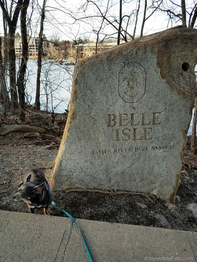 Chuy Chihuahua Belle Isle Adventure (29)