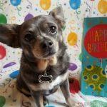 Happy 9th Birthday, Chuy!