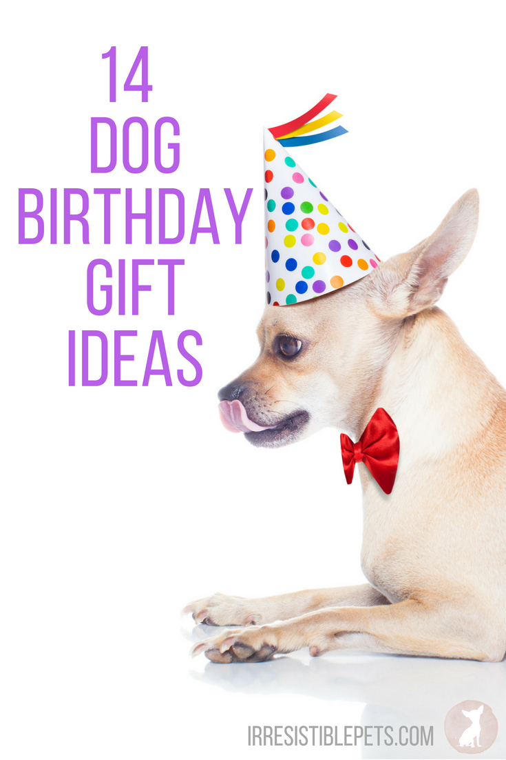 14 Dog Birthday Gift Ideas  sc 1 st  Irresistible Pets & 14 Dog Birthday Gift Ideas - Irresistible Pets