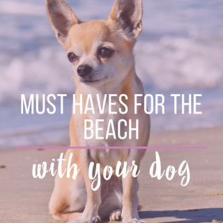 10 Must Haves for the Beach with Your Dog