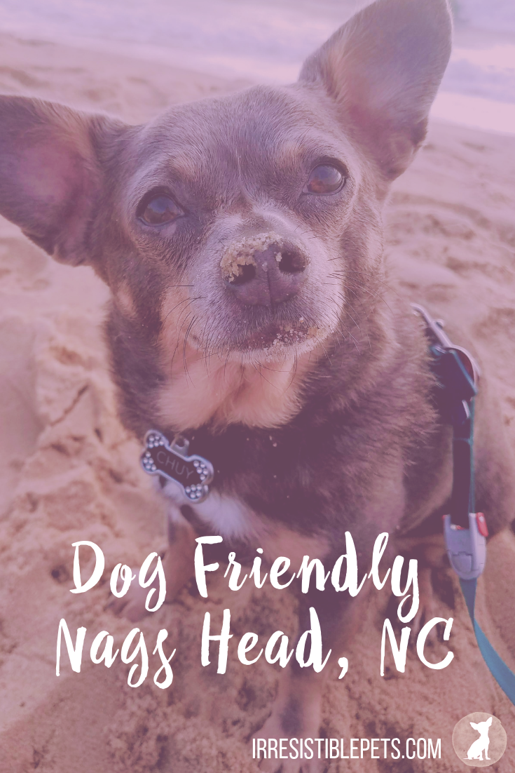 An Overnight Trip to Dog Friendly Nags Head